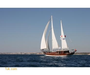 Artemisia (3)